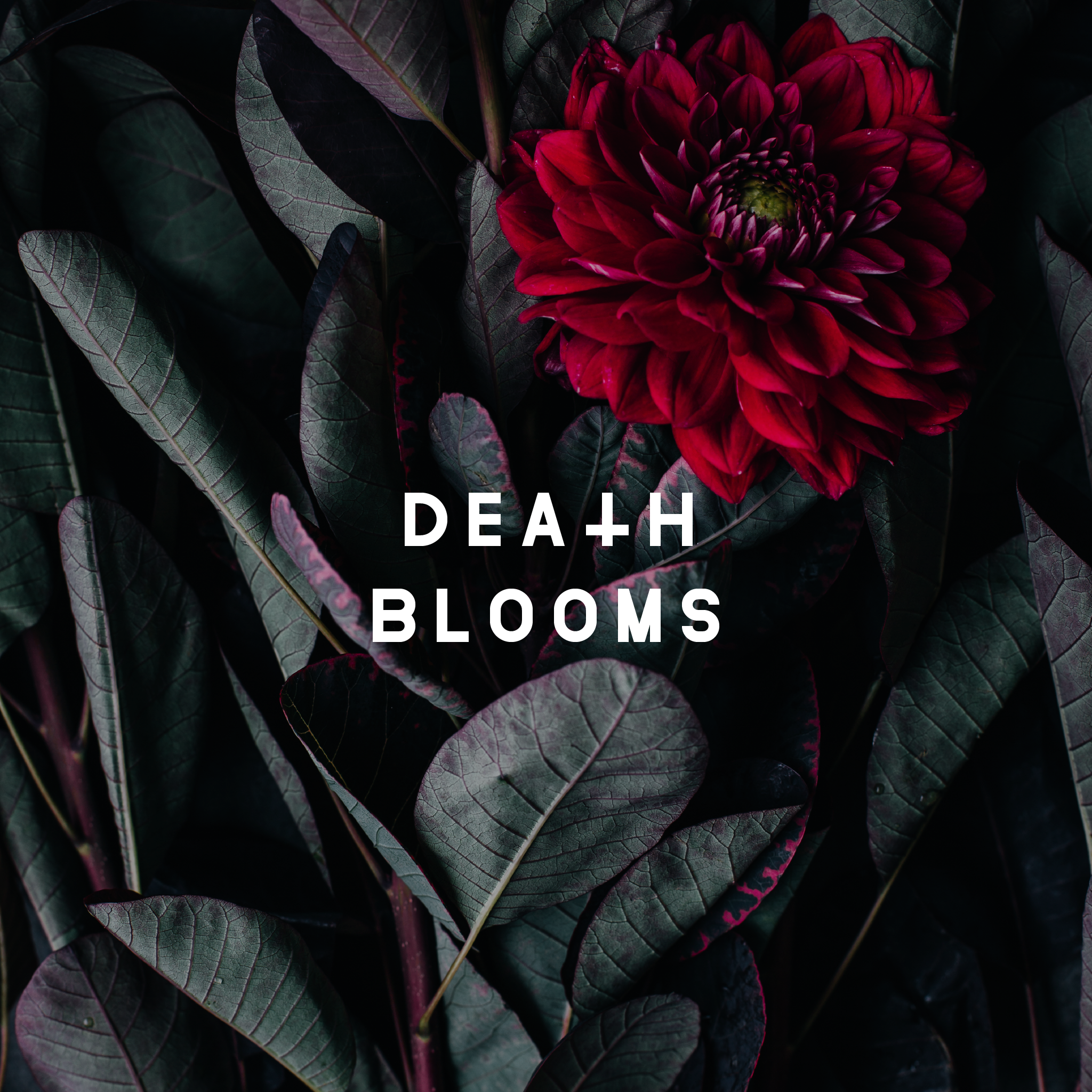 DEATH BLOOMS reveal new music video
