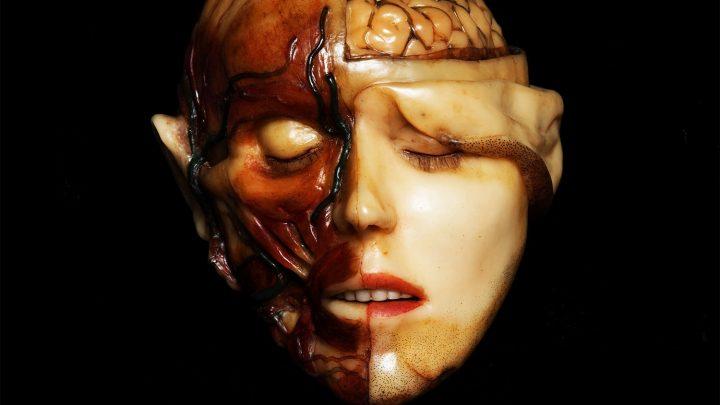 Black Moth – Anatomical Venus
