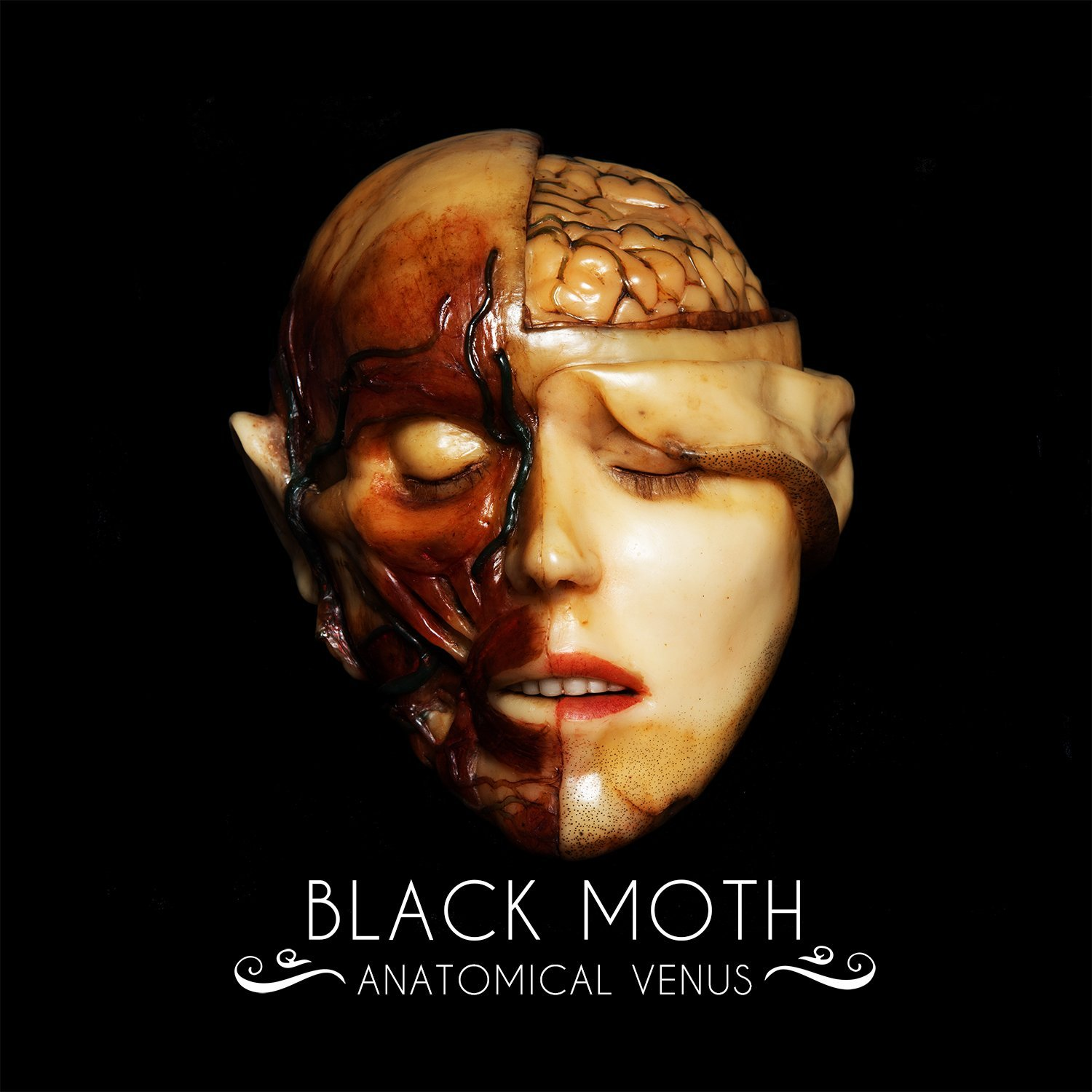 Black Moth – Anatomical Venus